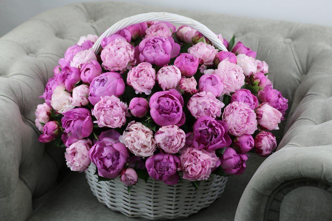 красивые картинки с днем рождения с цветами пионами эритема